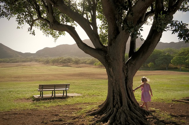 Child, Girl, Nature, Play, Bench, Landscape, Green