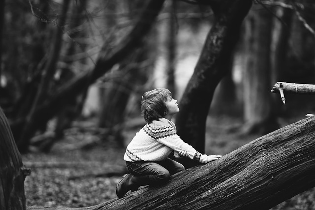 Boy, Child, Kid, Log, Person, Trees, Woods, Gray Forest