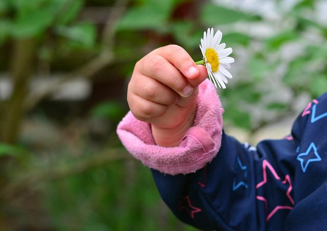 Hand, Child's Hand, Marguerite, Finger, Human, Keep