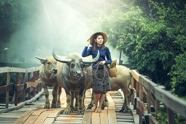 Animals, Asia, Buffalo, Cambodia, Cambodians, China