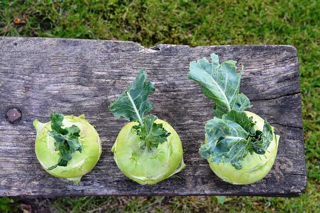 Chinese Cabbage ' Kohlrabi, Kalarepka, Green, Garden