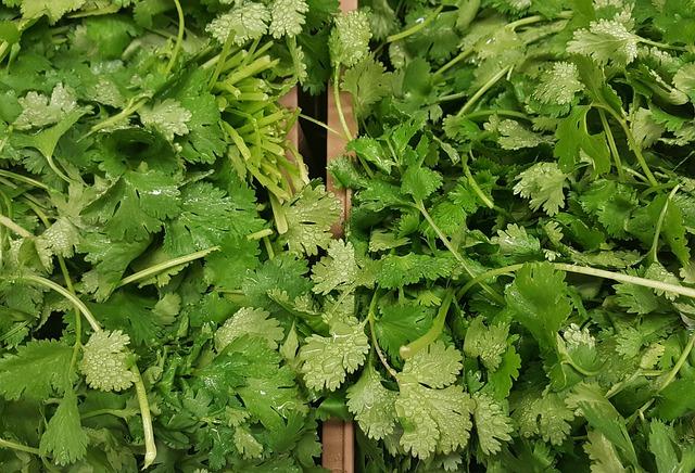 Cilantro, Coriander, Herbs, Chinese Parsley, Greens