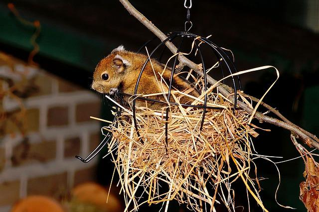 Chipmunk, Cute, Nager, Sweet, Animal, North America