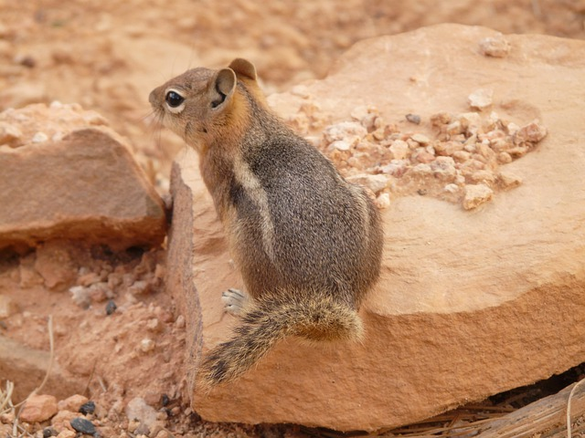 Chipmunk, Cute, Nager, Fur, Furry, Animal, Nature