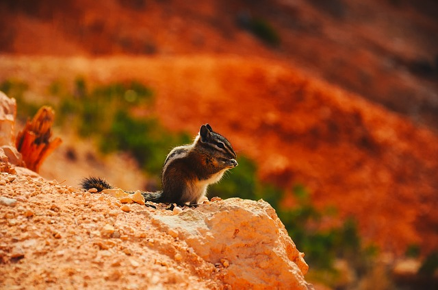 Chipmunk, Animal, Wildlife, Cute, Macro, Closeup