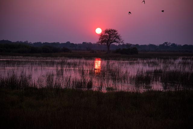 Botswana, Sunrise, Crimson, Red, Water, Swamp, Chobe
