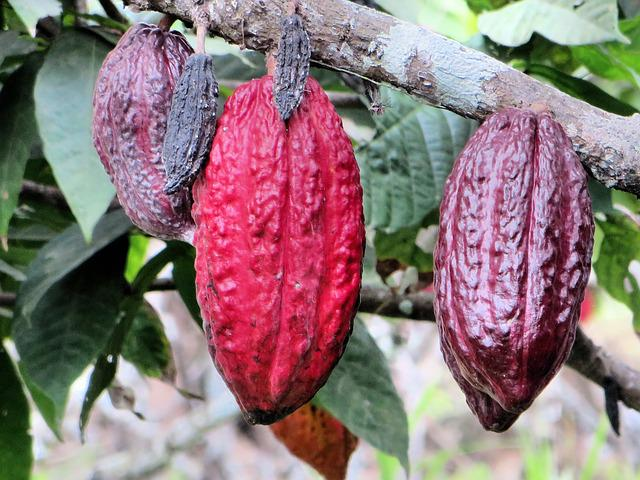 Ecuador, Guyayaquil, Pods, Chocolate, Culture, Cocoa
