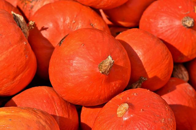 Pumpkin, Fruit, Autumn, Cucurbita Maxima, Choose, Large
