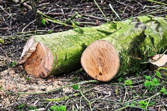 Log, Tree Trunk, Wood, Lumber, Chopped, Sawed, Cut
