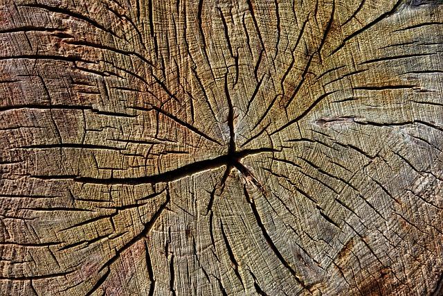 Wood, Chopped, Cut, Grain, Year Rings, Texture, Pattern