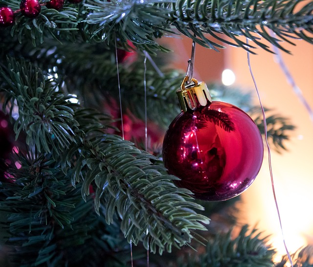 Christmas, Winter, Pinus, Celebration, Sphere, Fir