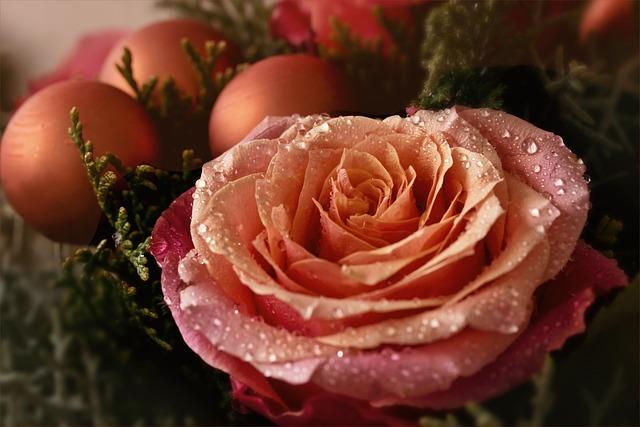 Rose, Advent, Christmas, Glaskugeln, Christmas Motif