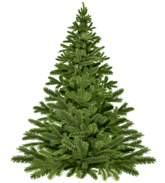 Christmas Tree Christmas, Christmas Tree, Pine