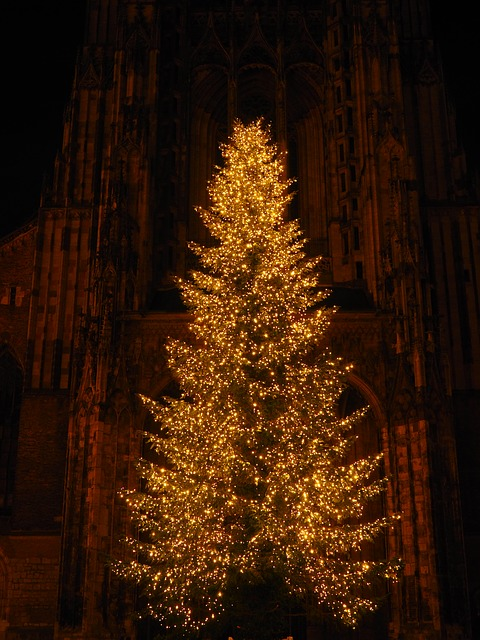 Christmas Tree, Christmas, Münster, Ulm Cathedral