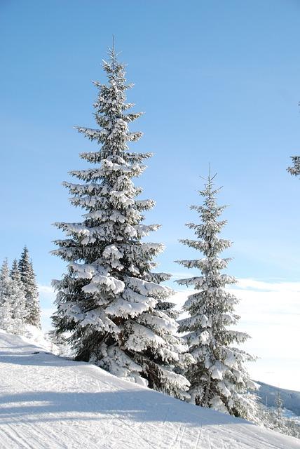 Winter, Snow, Tree, Den, Christmas Tree