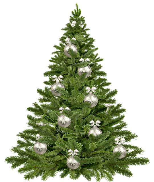 Christmas Tree, Twigs, Christmas, Pine, Tree, Plant