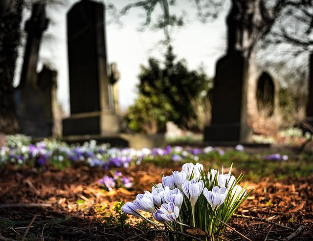 Graveyard, Church, Crocus, Cemetery, Religion, Grave
