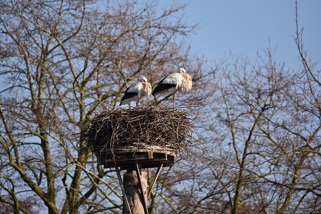 White Stork, Wading Bird, Bird, Ciconia Ciconia