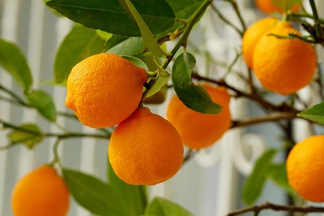 Fruit, Leaf, Food, Juicy, Citrus Fruit, Orange