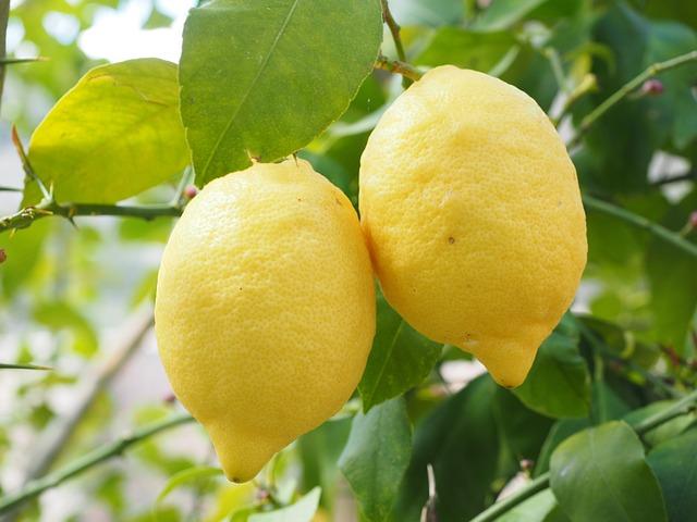 Lemon, Limone, Lemon Tree, Citrus × Limon, Citrus