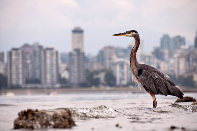 Amazing, Animal, Animals Hunting, Bird, Buildings, City