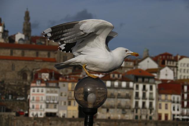 City, Seagull, Landscape, City Tour