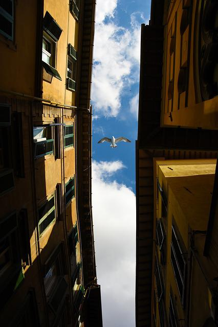 Pisa, Seagull, City, Air, Travel, Holiday, Idyllic