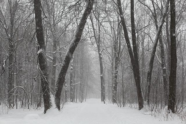 Park, Winter, Russia, City Park, Cold, Snow, Forest