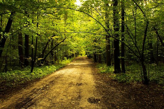 Nature, Park, Alley, City Park, Living Nature, Stroll