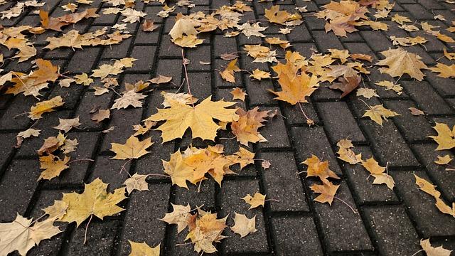 Autumn, Pavement, Fallen Leaves, City, Tile
