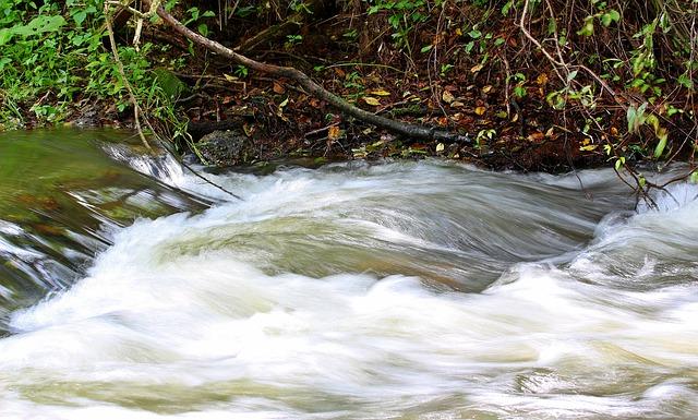 Water, Bach, River, Nature, Flow, Waters, Murmur, Clear