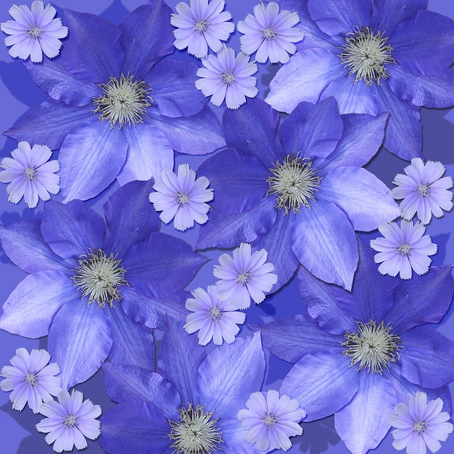 Flowers, Scrapbook Background, Clematis, Chicory
