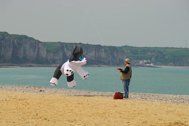 Kite, Beach, Cat, Sea, Cliff