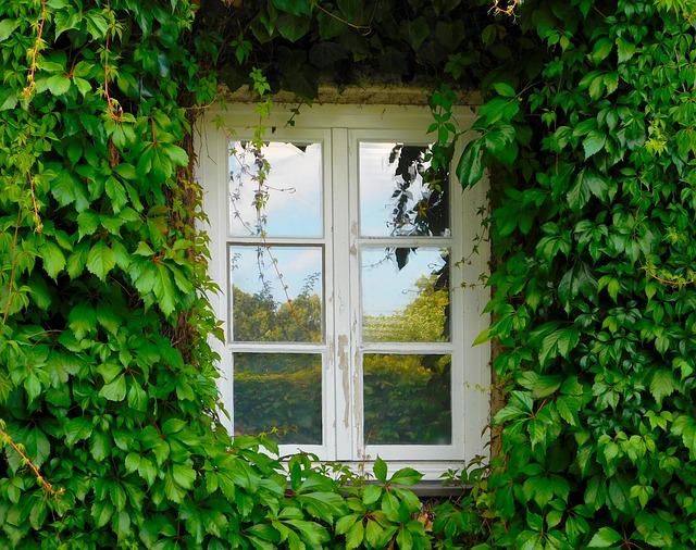Window, Ivy, Climber, Green, Wall, Facade, Fouling