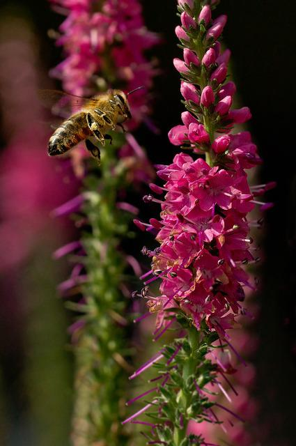 Bee, Insect, Close, Macro, Blossom, Bloom, Apis, Flower