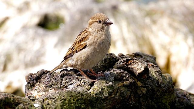 Sparrow, Bird, Nature, Close, Sparrows, Animal, Wing