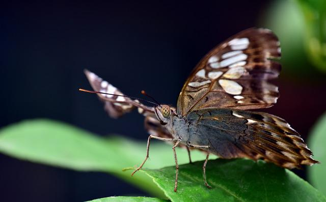 Insect, Butterfly, Nature, Animal World, Animal, Close