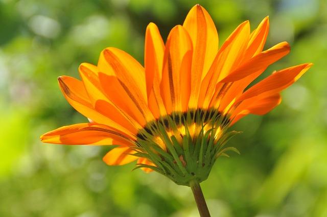 Flower, Blossom, Bloom, Orange, Plant, Close