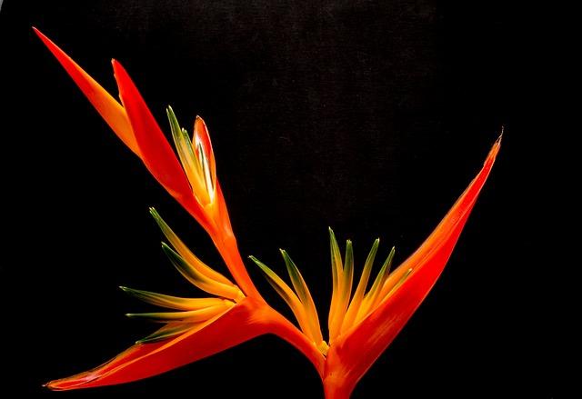 Blossom, Bloom, Flower, Red, Close