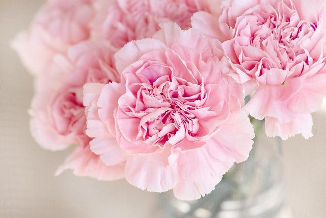 Flowers, Pink, Cloves, Cut Flowers, Close