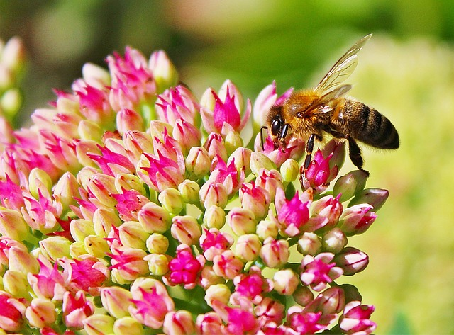 Bee, Blossom, Bloom, Close, Insect, Garden, Yellow