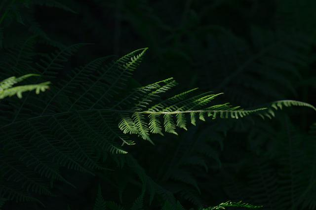 Fern, Green, Leaf Fern, Plant, Forest, Nature, Close