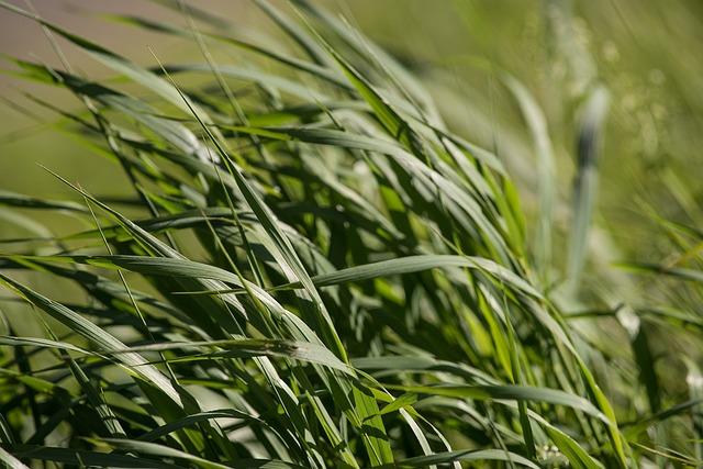 Grass, Green, Green Grass, Grass Meadow, Nature, Close