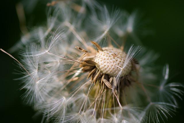 Nature, Plant, Close, Dandelion, Seeds, Growth, Garden