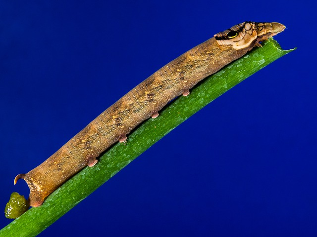 Caterpillar, Brown, How A Bough, Close