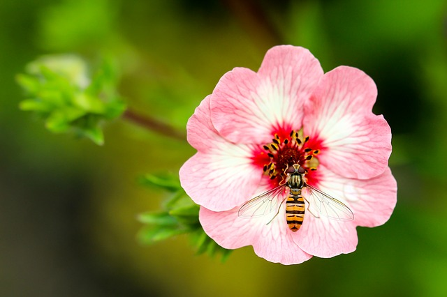 Wasp, Flower, Close, Collect Pollen, Insect