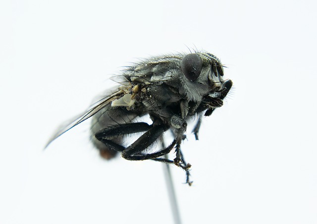 Fly, Macro, Close, Insect, Fly Eye, Close Up