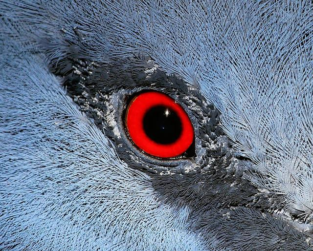 Eye, Macro, Bird, Fan-deaf, Close, Close Up, Nature