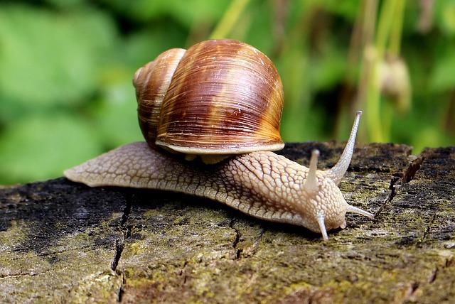 Snail, Shell, Mucus, Close, Slowly, Nature, Crawl