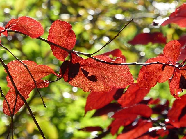 Fall Leaves, Close, Fall Color, Autumn, Nature